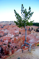 Bryce Canyon National Park Scenery, Utah-33