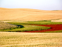 Crop land and a dry slough, North Dakota-1