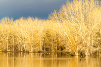 Waterfowl and Marsh Landscape, Bosque del Apache National Wildlife Refuge, New Mexico