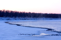 Canada Geese on a Frosty Morning-4-2