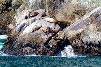 Stellers Sea Lions, Kenai Fjords National Park, Alaska-5