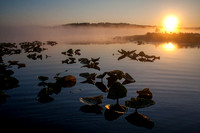 Lily Pads and Fog at Surnise, Kenai Peninsula, Alaska
