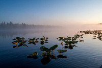 Lily Pads and Fog at Dawn, Kenai Peninsula, Alaska-3