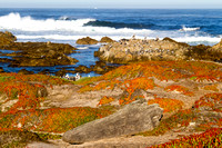 Beach Scenes, Monterey, California-3