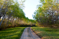 Road through an Aspen Forest in the Wakopa Wildlife Management Area, Turtle Mountains, North Dakota