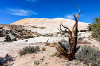Scenery at Yellow Rock, Grand Staircase - Escalante, Utah-15