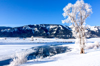 Soda Butte Creek on a Frosty Morning, Yellowstone National Park, Wyoming-6