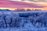 Frosty Trees at Dawn
