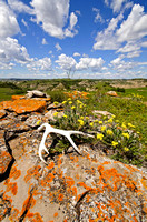 Deer shed on lichen-covered outcrop, Maah-Daah-Hey trail, North Dakota