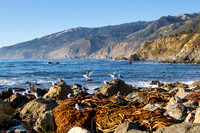 Rocks and Kelp on the California Coast-2