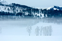 Fog in Lamar Valley, Yellowstone National Park, Wyoming-2