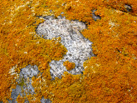 Lichens on a rock, North Dakota prairie (2 of 4)