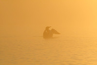 Common Loons - Foggy Sunrise-13