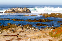 Beach Scenes, Monterey, California-4