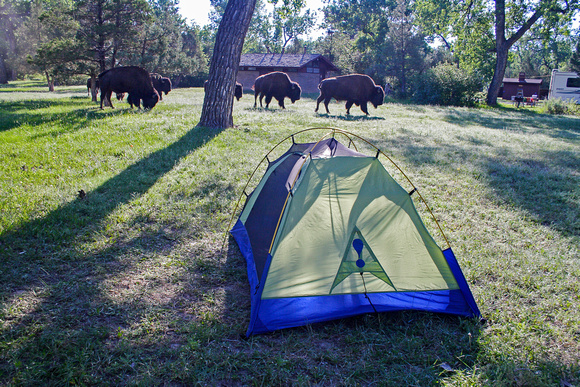 Bison and tent in the North Dakota badlands & Stoney Lonesome Photos | Camping | Bison and tent in the North ...