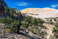 Scenery at Yellow Rock, Grand Staircase - Escalante, Utah-14
