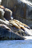 Sea Lions Sunning, Kenai Fjords National Park, Alaska-6