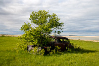 Tree Growing out of Hood of Old Car, Central North Dakota