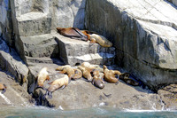 Sea Lions Sunning, Kenai Fjords National Park, Alaska-7