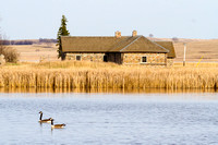 Canada geese and the Long Lake Stone Buildings